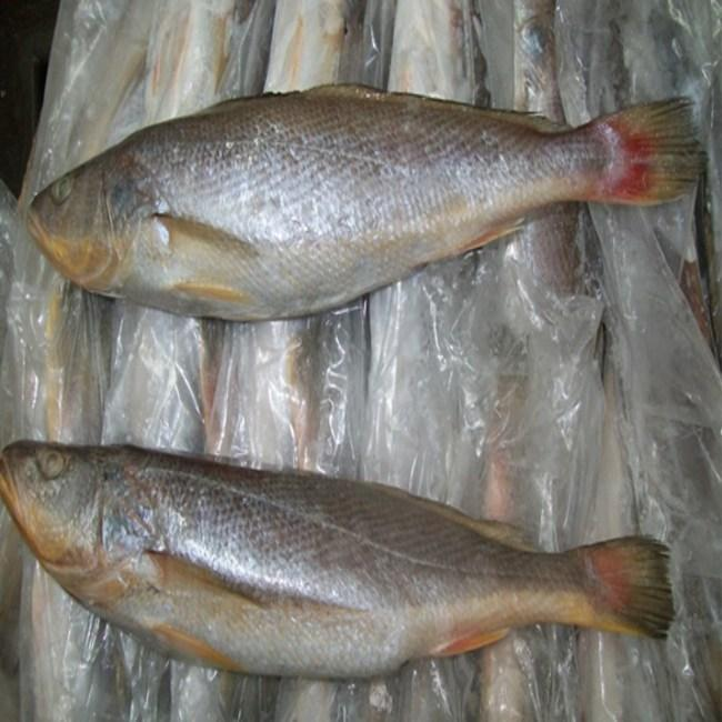 Case Of Frozen Croaker Fish - 25 Lbs Whole