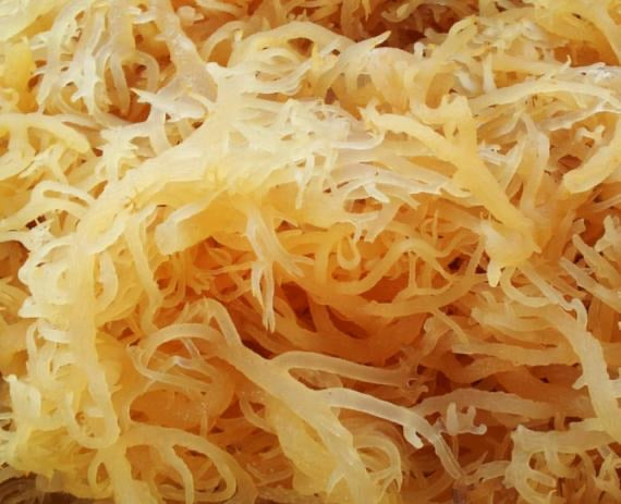 Irish Sea Moss (2 lbs)