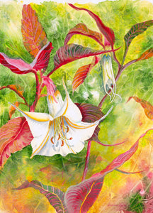 """Datura Enchantment"""