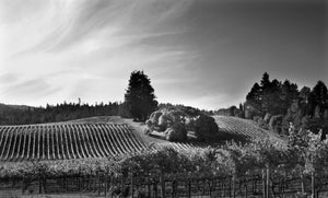 """Goldeneye Vineyard"""