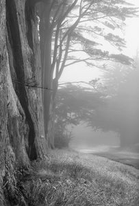"""Trees in Fog"""