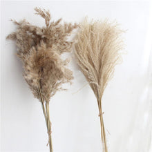 Load image into Gallery viewer, Pampas Grass 2