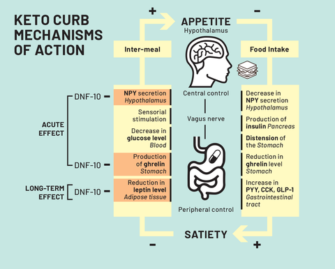 KETO CURB Mechanisms of Action