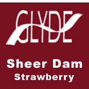 GLYDE | Sheer Dam / Strawberry, Dams - LuckyBloke.com | Global Condom Experts