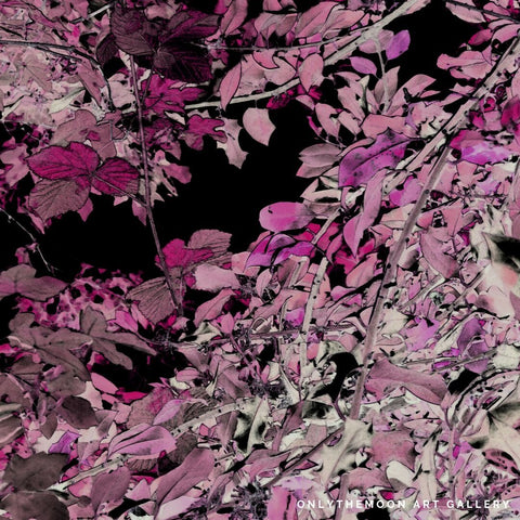Autumnal Artwork, Damson Colored Hedgerow with Black Background, Onlythemoon Art Gallery