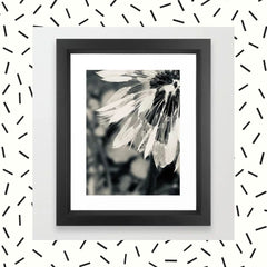 Black and White Dandelion 1 Photograph Framed Art Print