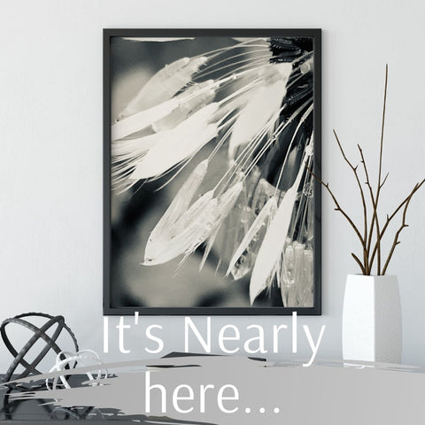 It's Nearly Here... Black & White Dandelion 1 Art Print, Lifestyle Image