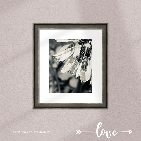 Black and White Dandelion 1 Framed Art Print by Onlythemoon