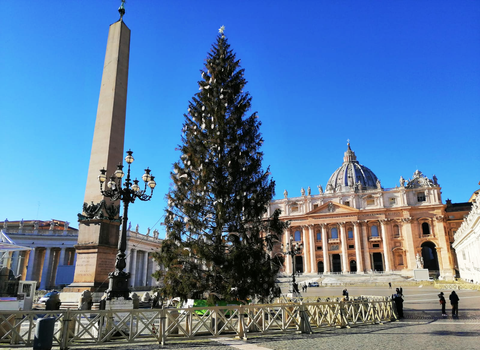 st peter's square at christmas