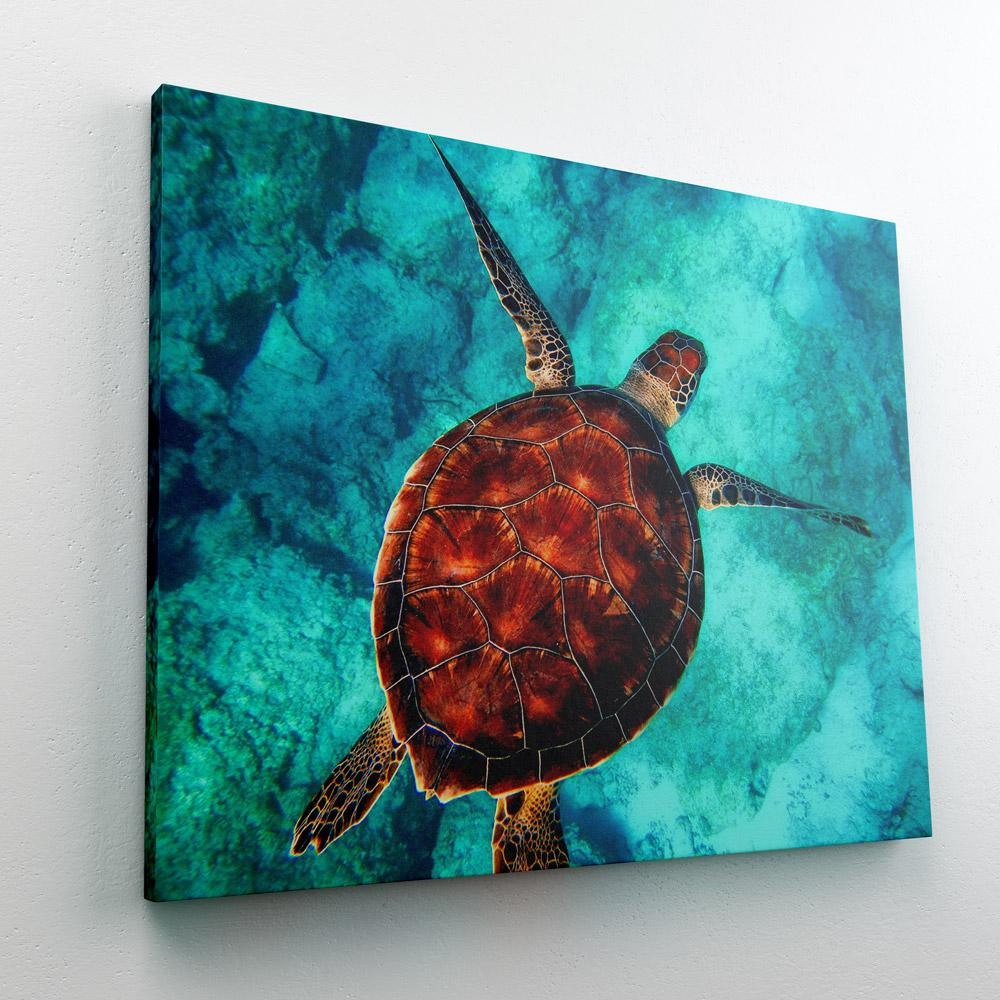 paint-by-numbers-sea-turtle