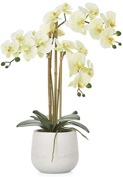 "Phalaenopsis Potted 23"" Triple STem Orchid, Yellow"