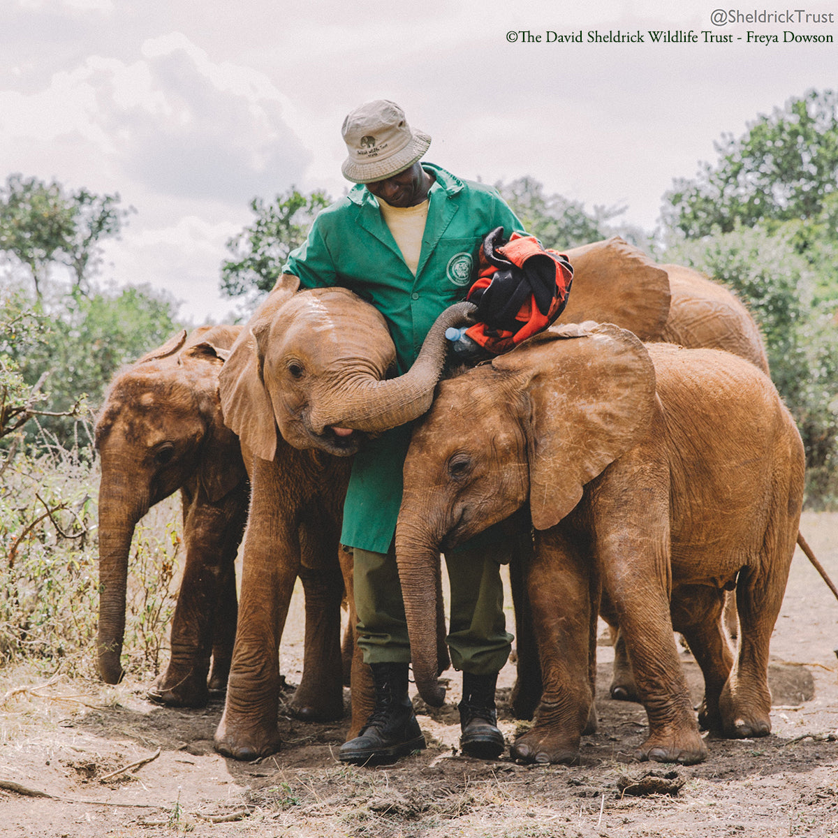 © The David Sheldrick Wildlife Trust / Freya Dowson