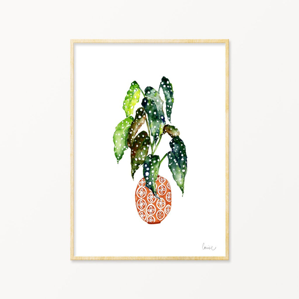 Image of illustrated spotted begonia plant print in frame