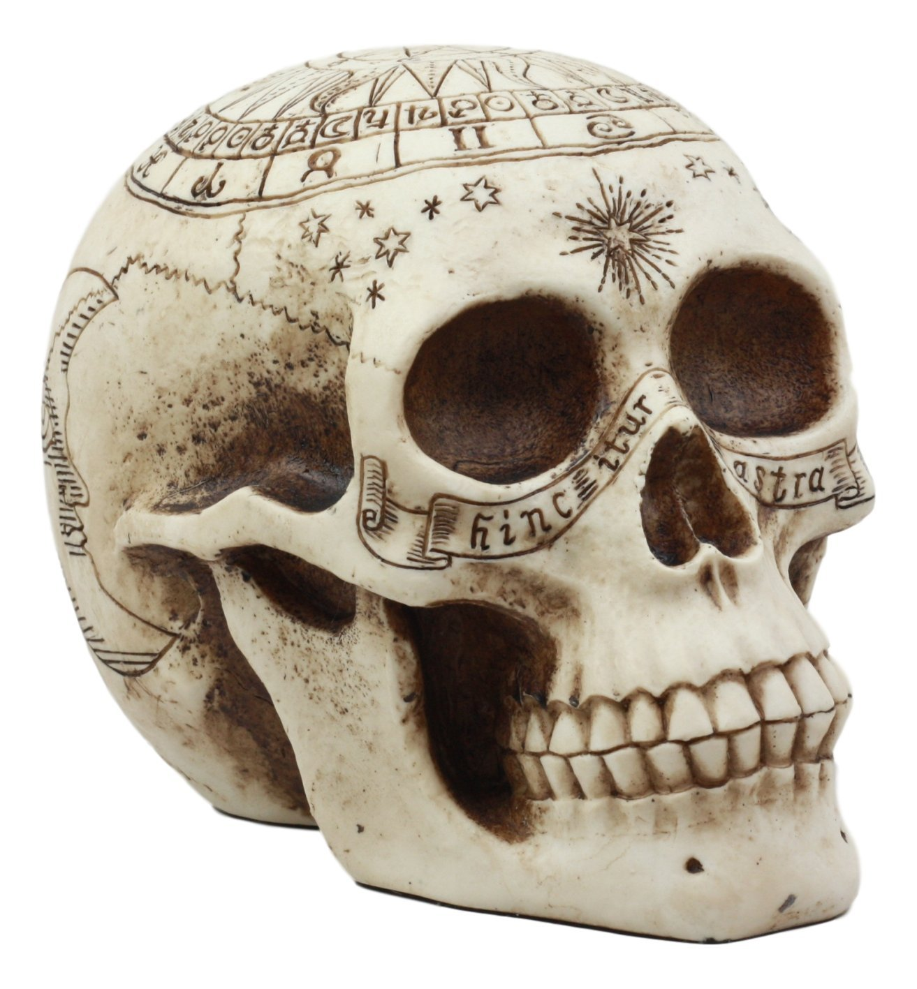 Ebros Gift Solar Astrology Celestial Skull Statue Ancient Prophecy Cartography Relic Map Skull Cranium Decorative Figurine Ossuary Macabre Skulls and Skeletons Decor - SonsofOdin Co Goth Viking Biker Jewellry