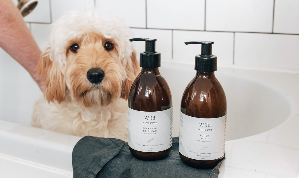 Organic Natural Eco-Friendly Sustainable Grooming Products For Dogs Best Shampoo Conditioner