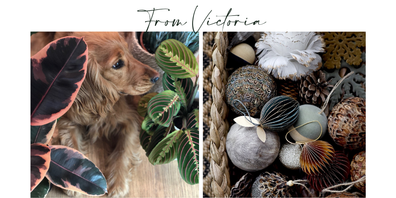 Small Local Ethical Business Christmas Gifts Dogs