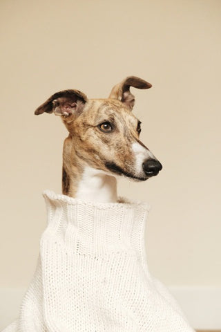 Wild For Dogs Organic Natural Vegan Best Products for Whippet