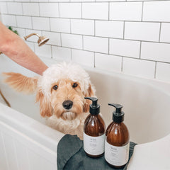 Wild For Dogs Blog Luxury Organic Grooming For Dogs Bonding