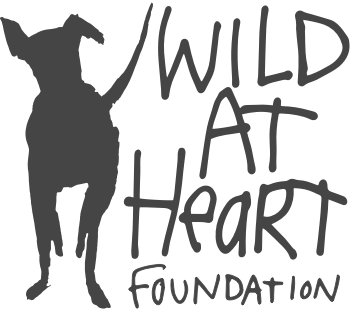 Wild At Heart Charity Dog Foundation Shampoo Organic Vegan Cruelty-Free Eco-Friendly
