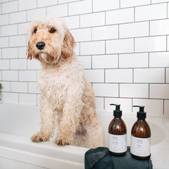 Best Shampoo For Dogs Organic Natural Eco FRiendly Sustainable