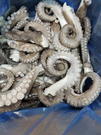 Octopus Legs - Vulgaris, IVP, Spain