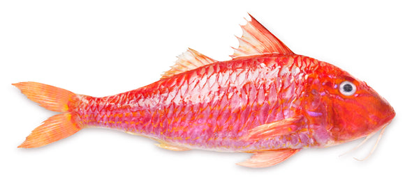 Red Mullet - Whole, Gutted, Gills Out, Scaled, IQF, IWP