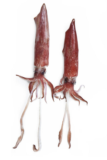 Squid - Todarodes Tubes (China)