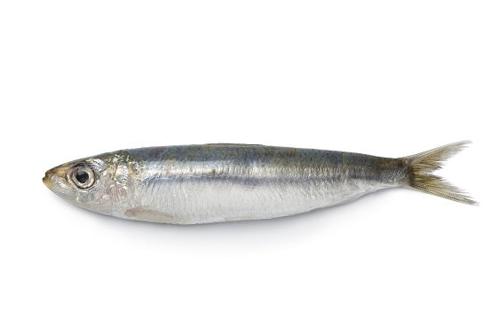 Sardine - Whole, Spanish, USA