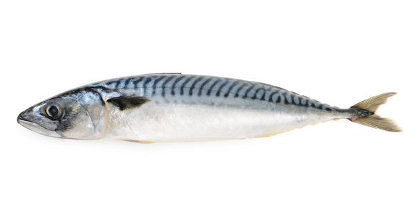 Mackerel - Whole, Blast Frozen, Iceland