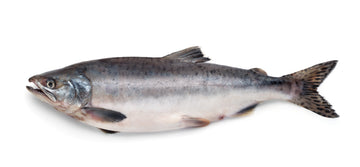 Salmon (Atlantic) - IQF Skin on Fillets
