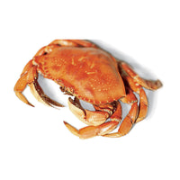 Dungeness Crab - Whole, Cooked