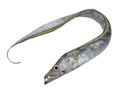 Cutlassfish (Ribbon fish) - IVP Whole Rounded