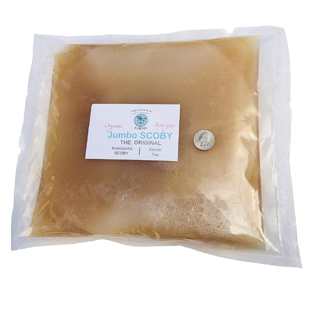 "Jumbo Kombucha SCOBY: 10"" - 12"" Commercial Grade Premium SCOBY + 5 Cups Starter Tea.  Extra Large SCOBY that makes a 5-Gallon Batch!"