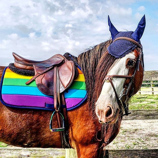 Custom Saddle Pad LGBTQ+ Pride