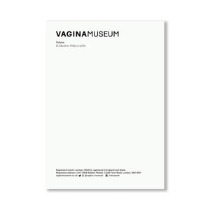 Vulva Illustration Postcard