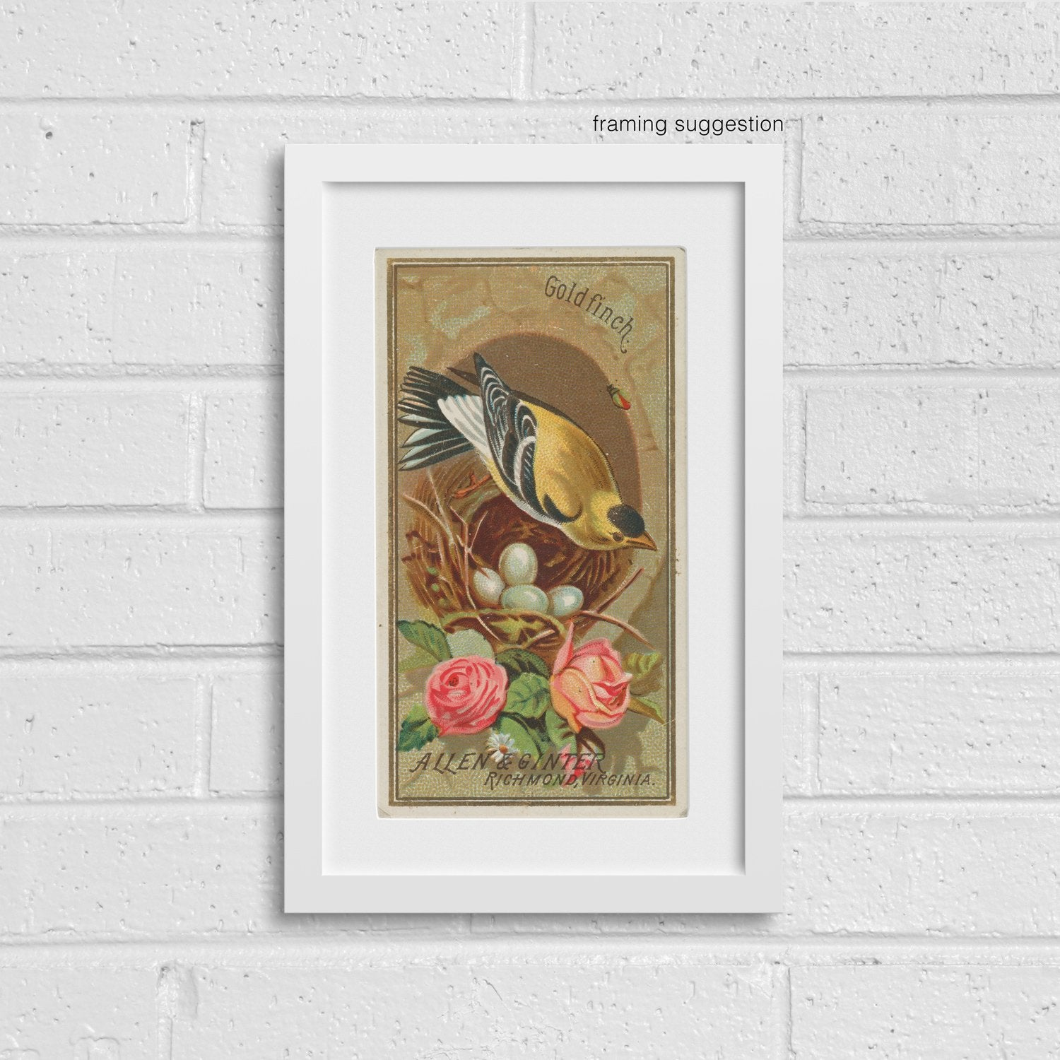 framed giclee print of vintage goldfinch bird illustration