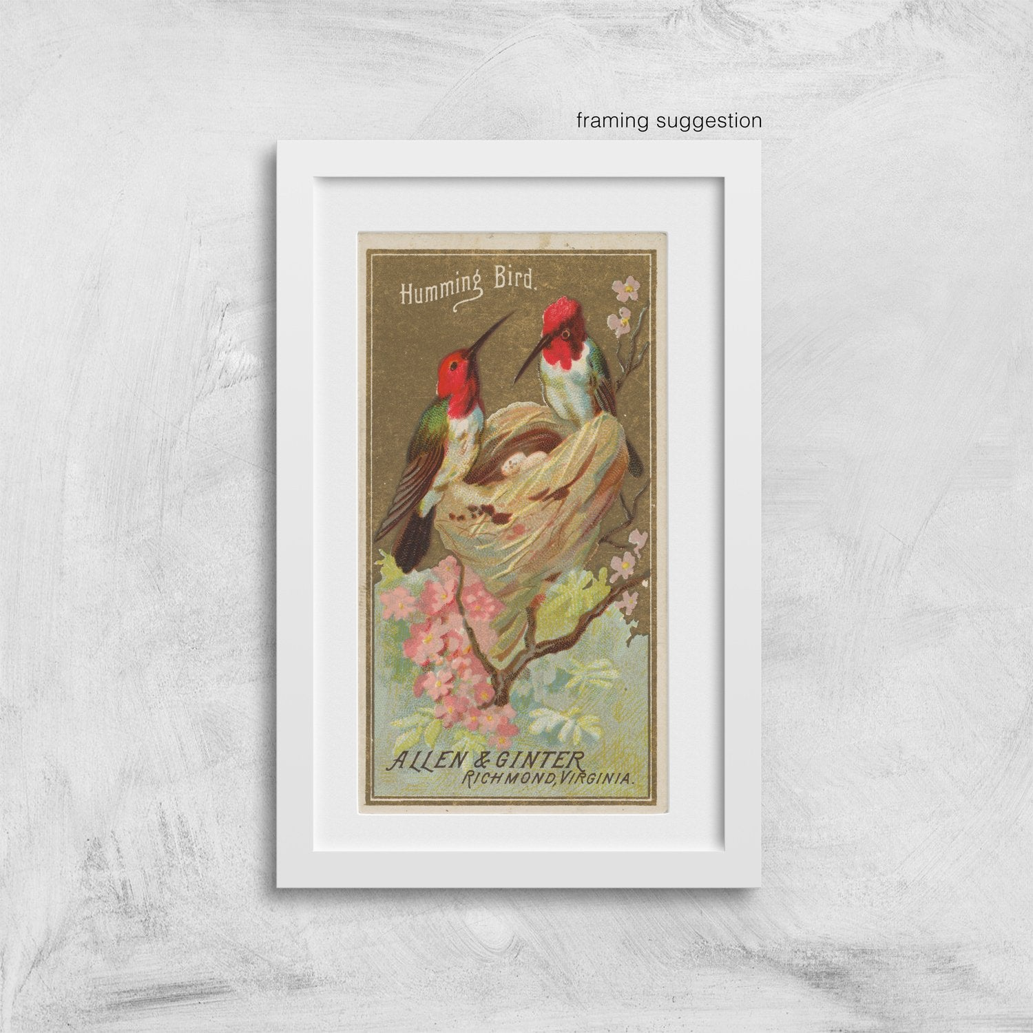 framed vintage hummingbird bird print