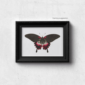 framed black and red butterfly print