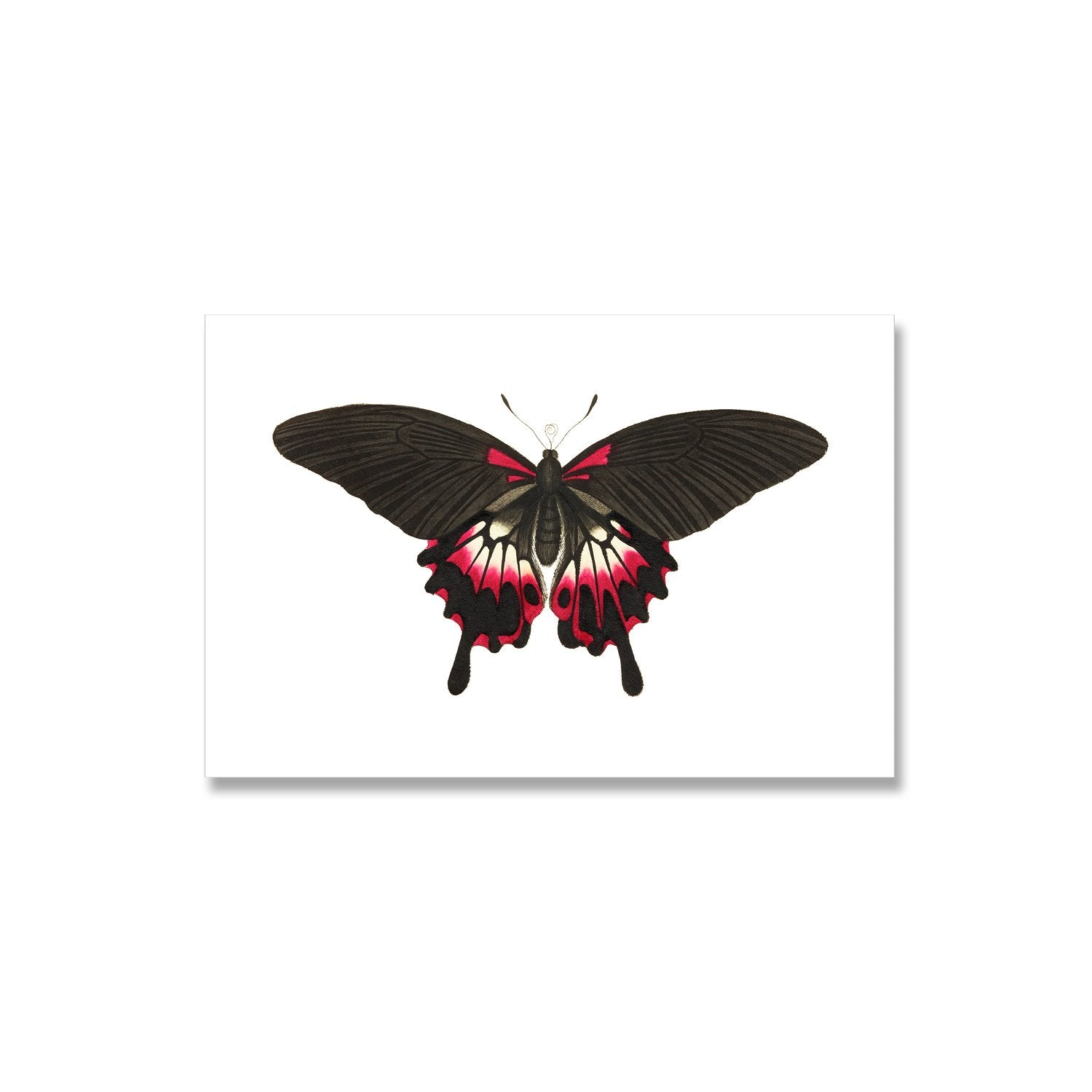 black and red butterfly print