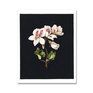 geranium flower print with black background