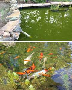 Dealing with Green Water, Mossy Algae and String Algae