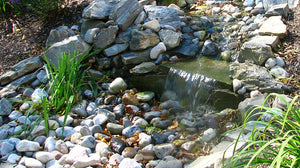 Recommended Routine Pond Practices