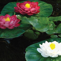Oase Floating Lily Pads 3-Piece Pond Ornament Set in a pond