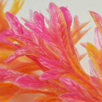 Closeup of orange plant on biOrb® Aquarium Plant Red/Pink Color Pack