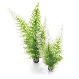 biOrb® Winter Fern Plant Pack