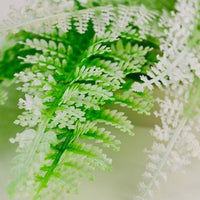 Closeup of biOrb® Winter Fern Plant Pack