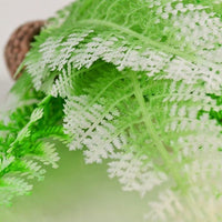 Detail view of biOrb® Winter Fern Plant Pack