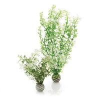 biOrb® Winter Flower Plant Pack