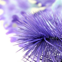 Detail view of small biOrb® Purple Kelp Aquarium Decoration