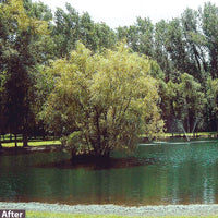 Lake after using Airmax® Pond Logic® WipeOut™ PondWeed Defense® Aquatic Herbicide